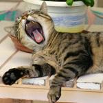 photos gratuites Photos gratuites de chats et de chatons.