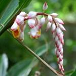 photos gratuites Fleurs tropicales