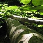 photos gratuites Photos gratuites de paysages de sous-bois, de ruisseaux dans la forêt. Photos libres de droit d'arbres, de parcs forestiers, de végétation, forêts alpines.