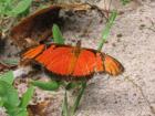 photographie gratuite Papillon