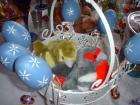 Fotografia libera Pasqua