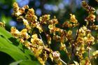 photographie gratuite Orchidée